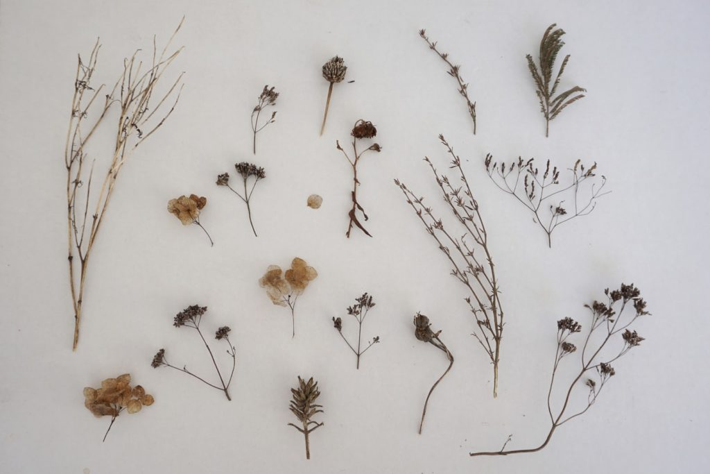 plantes sèchées diverses pour tisane